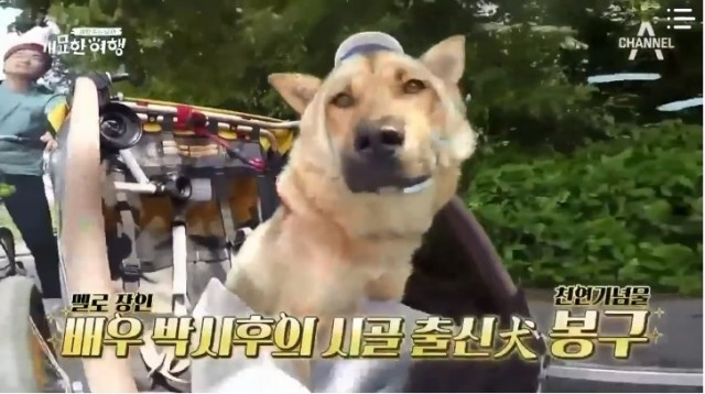 A Man Who Feeds the Dog Season 4 Ep 7 Cover