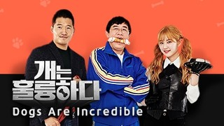 Dogs are Incredible Episode 11.2 Cover