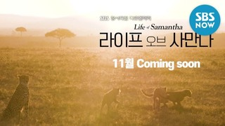 Life of Samantha cover