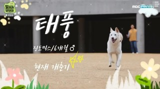 Run Puppy Run Episode 10 Cover